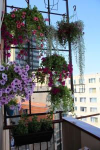Apartment Bosiljak & Cipka