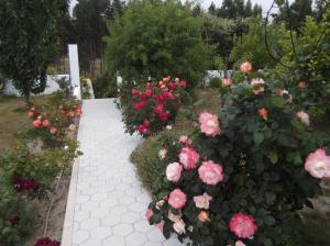 A garden outside House Cesaredas