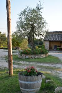 A garden outside Agriturismo Podere dell' Olmo