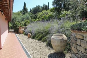 Tuscany Roses