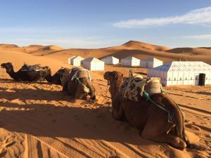 Dream camp Merzouga