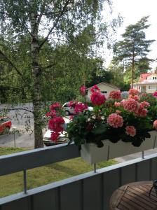 Balcon ou terrasse dans l'établissement Venemies