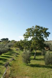 A garden outside La Vecchia Cava