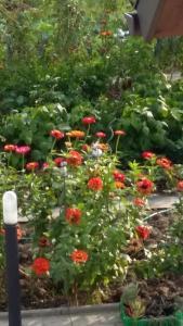 A garden outside Gite Schmitt