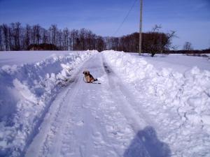 L'établissement Gîte Les Hirondelles en hiver