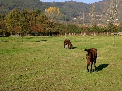 Alojamento De Turismo Rural Quinta Da Torre De Refoios