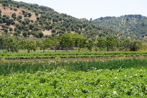 Azienda Agricola Disanti
