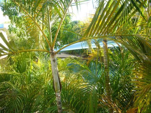 Pemandangan kolam renang di Pacific Sands Apartments atau berdekatan