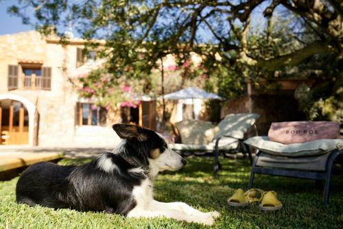 Pet or pets staying with guests at Bou Ros Finca Can Veritat