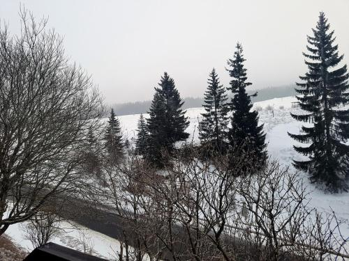 L'établissement L'Edelweiss 29F en hiver