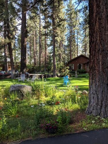 Black Bear Inn Tahoe Gay Owned