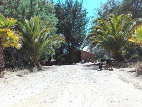 Vakantiehuis Casa Campo Algarrobo (Chili Algarrobo ...