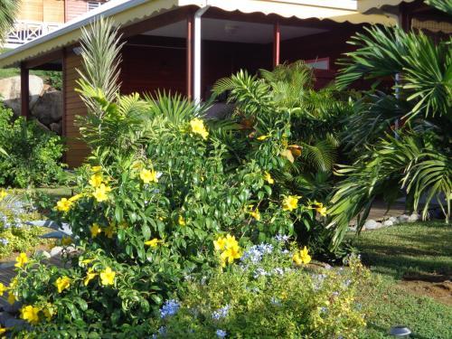 A garden outside Gites Couleurs Créoles