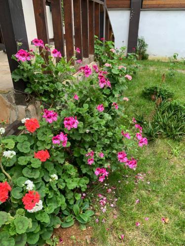 A garden outside Hadji Amina Villa with Car Rental