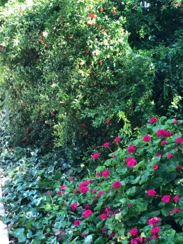 A garden outside Droushia Heights Apartments