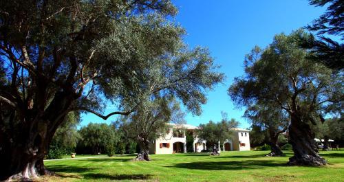 Κήπος έξω από το Olivastro Villa