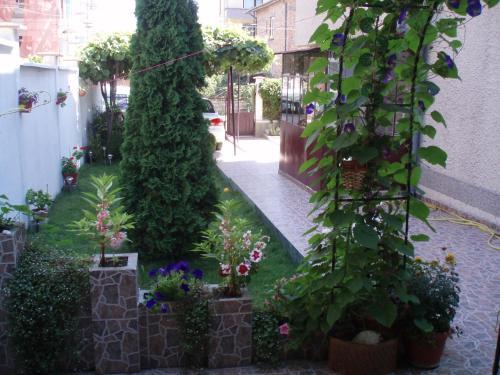 Minchevi Guest House