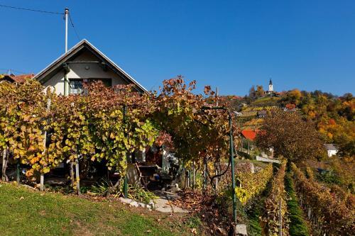 Vineyard Cottage Vercek