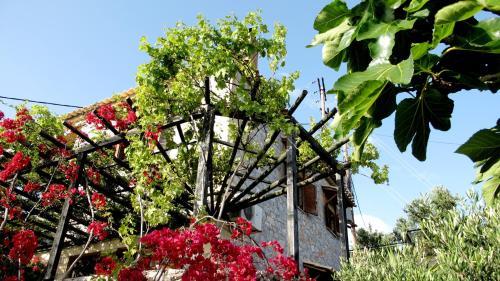Papanestoras Apartments - Kardamili Greece