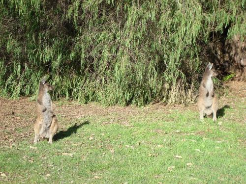 Pet or pets staying with guests at Margaret River Chalets