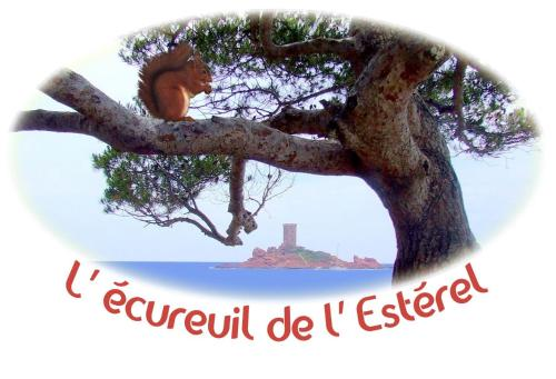 L'Ecureuil de l'Estérel