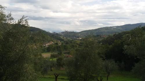 Frantoio Pieracci