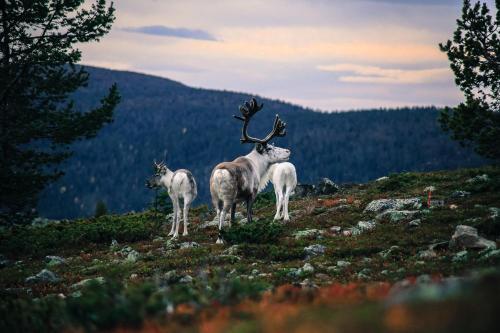 Lapland Senses