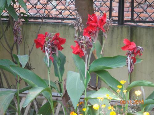 DEV Guest House P.Ltd. Arun Thapa Chowk