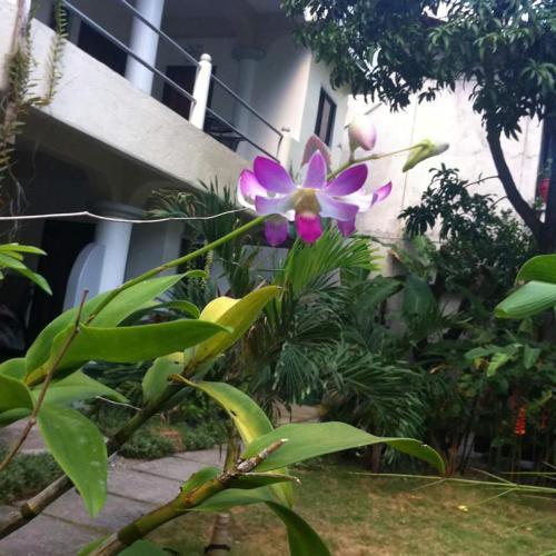 Bihai Garden