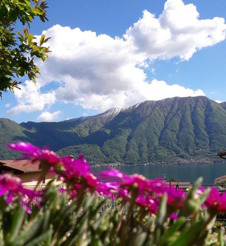 Lago e Ulivi