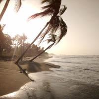 Playa Nova Camping and Surfing Lodge