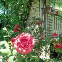 Il Giardino di Zia Ines