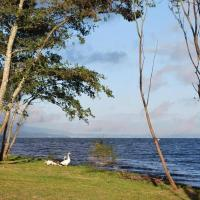 Parque Pinares Pucon