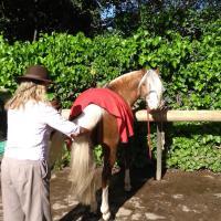 Entre caballos y vides