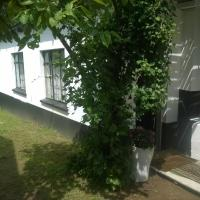 Panda Cottage
