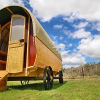 Glen Eden Ranch - Protea Pod