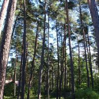 Pine Park Residence