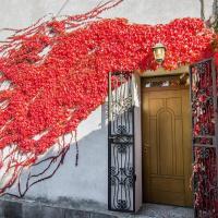 Edera Rossa