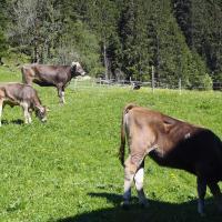 Farm Stay Siglaste