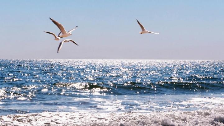 Encuentra el mejor lugar para pasear por la playa en Garopaba