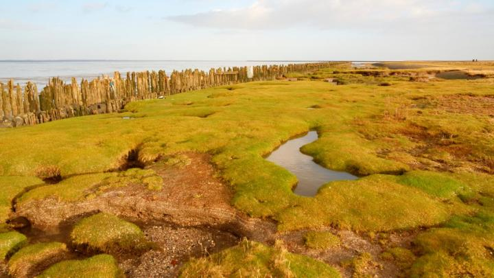 Encuentra el mejor lugar para pasear por el campo en Westernieland