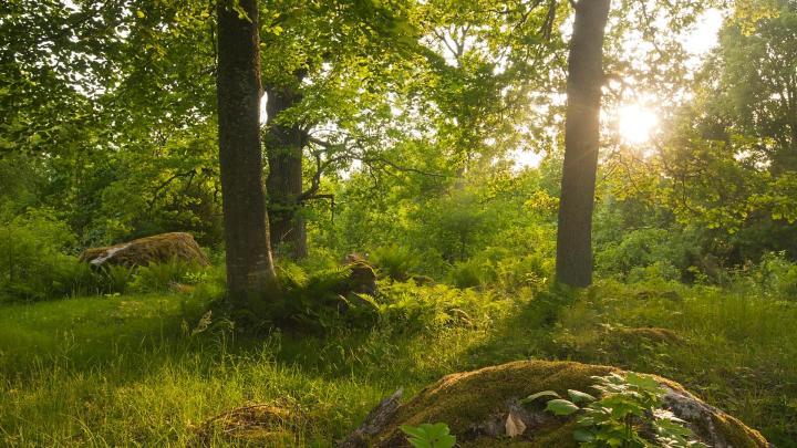 Encuentra el mejor lugar para la flora y fauna en Färna