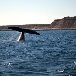 Puerto Madryn 178 otel