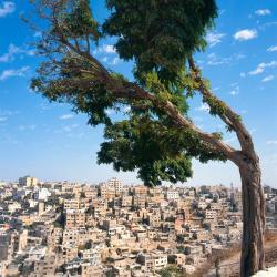 Amman 623 hotels