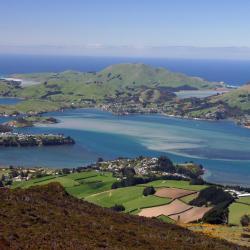 Dunedin 8 Hostels