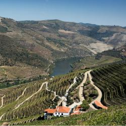 Ervedosa do Douro 3 Hotels