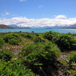 Lake Tekapo 4 pensiuni