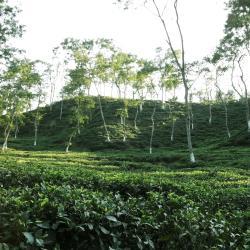 Sylhet 6 hotela koji primaju ljubimce