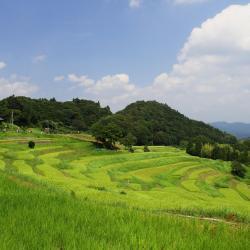 Kamogawa 13 hotel