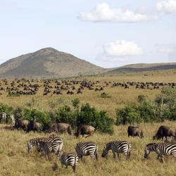 Masai Mara 7 hotels